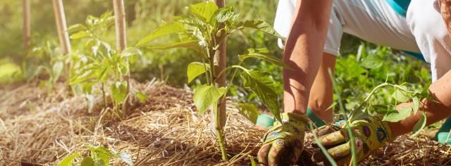 Agroecologie pentru dezvoltarea durabilă rurală